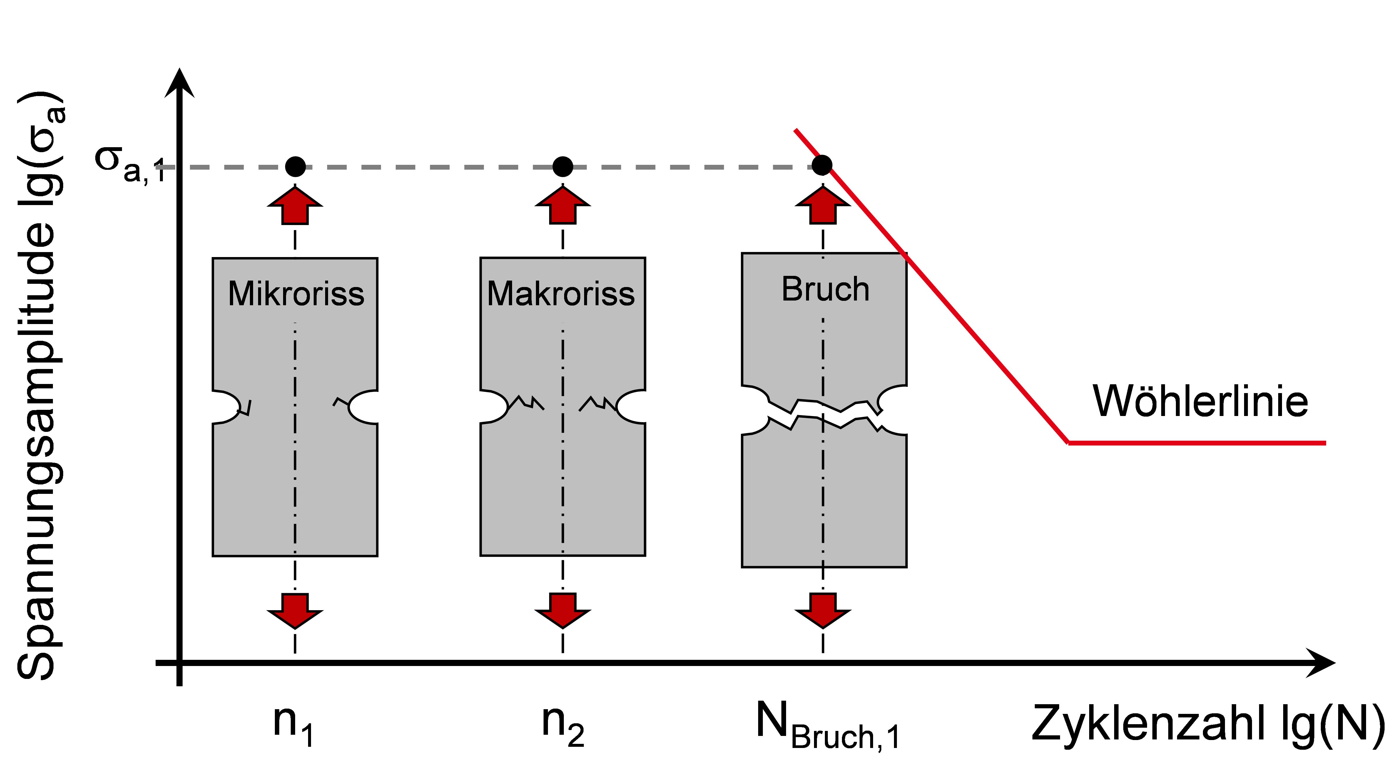 Phasen Rissfortschritt bei einer Wöhlerlinie