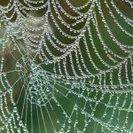 Notwendige Netzgüte für eine FEM der Betriebsfestigkeit (Hexader, Tetraeder, lineares oder nichtlineares Netz?)